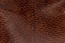 Beaver Tail Glazed Cognac