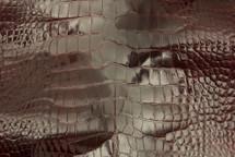 Alligator Skin Belly Glazed Burgundy 40/49 cm Grade 2