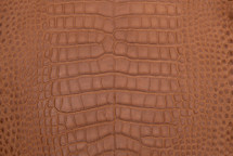 Alligator Skin Belly Matte Cognac 65+ cm Grade 4