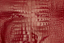 Alligator Skin Belly Glazed Red 30/34 cm Grade 4
