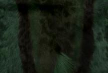 Springbok Hide Olive
