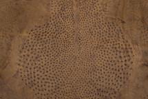 Ostrich Skin Vintage Peat