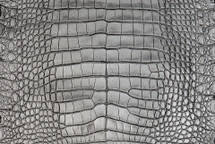 Alligator Skin Belly Crisp Silver/Black 28/32 cm Grade 2