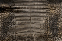 Alligator Skin Belly Frost Gold Black 30/34 cm Grade 2