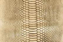 Python Skin Nova Gold Black