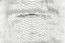 Python Skin Nova Silver