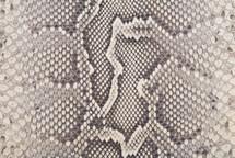 Python Skin Diamond Front Cut Crust