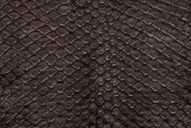 Arapaima Skin Glazed Chocolate