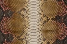 Python Skin Long Miku Pink