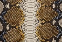 Python Skin Long Renaissance Jaune