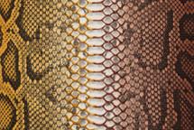 Python Skin Long Bifas Brown