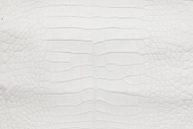 Alligator Skin Belly Matte White 35/39 cm