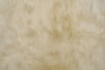 Long Hair Sheep Skin White