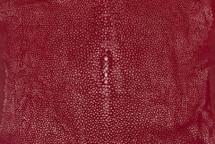 """Stingray Skin Long Shape Polished Geranium 4"""""""