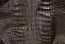 Alligator Skin Belly Glazed Brown 45/49 cm Grade 4