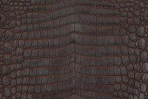 Nile Crocodile Skin Belly Two-Tone Nicotine
