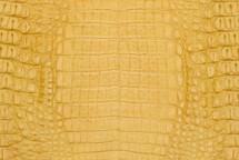 Caiman Skin Belly Matte Yellow