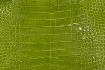 Alligator Skin Belly Glazed Lime 23/27 cm Grade 4
