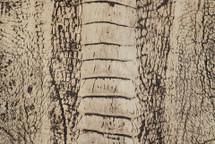 Ostrich Leg Marble