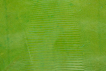 Lizard Skin Glazed Lime