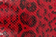 Anaconda Skin Glazed Red
