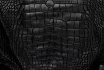 Alligator Skin Belly Matte Black 65+ cm Grade 4