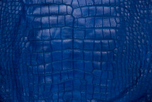 Alligator Skin Belly Matte Cobalt 65+ cm Grade 4