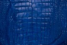 Alligator Skin Belly Matte Cobalt 65+ cm Grade 4