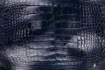 Alligator Skin Belly Glazed Navy 25/29 cm Grade 4