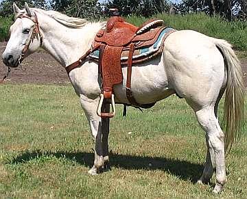 American Quarter Horses Saddleupcolorado