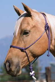Double Diamond 6mm Nylon Reata Halters Brannaman Series