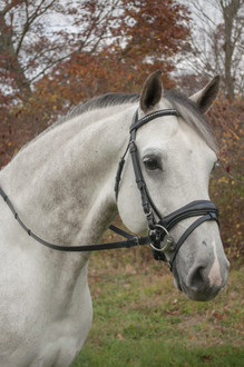 Red Barn Piaffe Snaffle Bridle