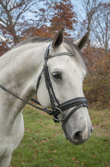 Red Barn Passage Snaffle Bridle in Black
