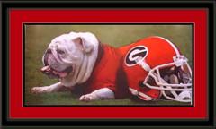 Dawg Days Georgia Bulldog Mascot Framed Picture