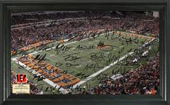 Cincinnati Bengals Signature Framed Picture