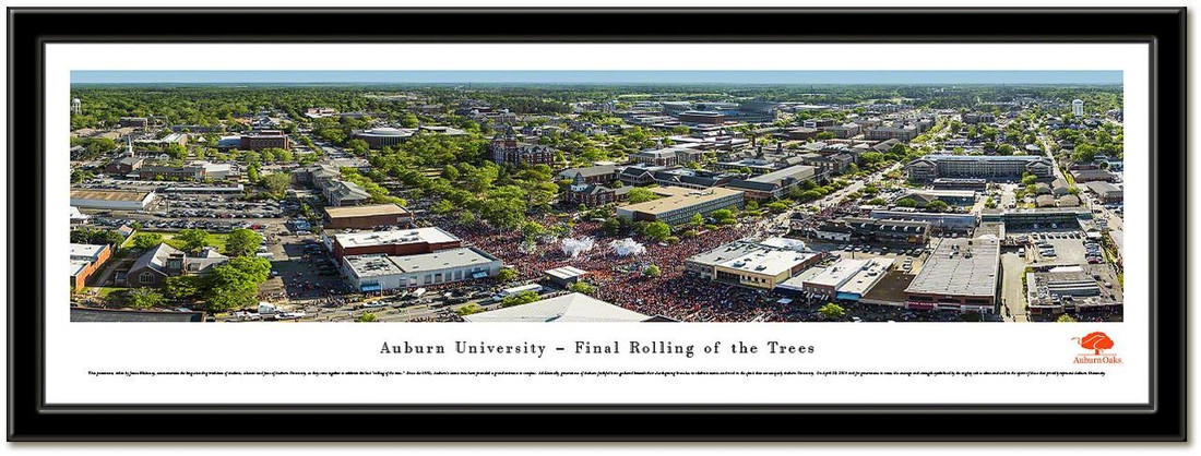 Auburn Rolling of the Trees Aerial Framed Photo no mat