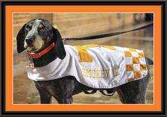 Tennessee Volunteers Mascot Smokey Framed Print