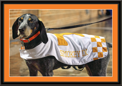 Tennessee Volunteers Mascot Smokey Framed Print