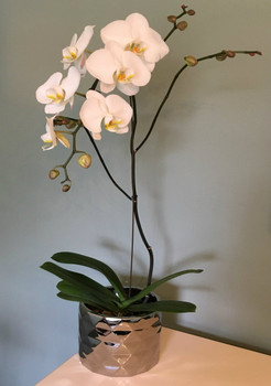 Exceptional White Orchid in Silver Glaze Pot