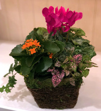 Colorful Moss and Vine Basket