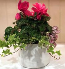 White Tegan Pot Color-filled