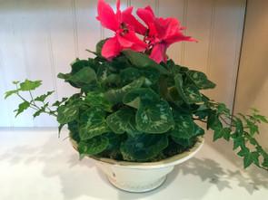 Bountiful Bowl of Plants