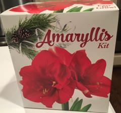 Amaryllis Growing Kits