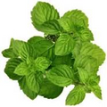 Spearmint Herb Dry 2 oz. $4.95