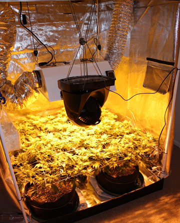 Benefits of using Gorilla Grow Tents for Indoor Gardening