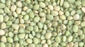 Lima Bean Seeds-Thorogreen