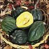 Wholesale Table Queen Winter Acron Squash Seeds-1/2Pound
