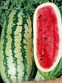 Georgia Rattlesnake Watermelon Seeds