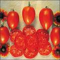 Amish Paste Tomato Seeds