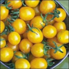 Yellow Cherry Tomato Seeds-Organic